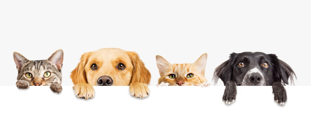 Where to buy Pet Accessories in the UK